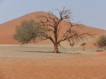 Namibia 2018 1391