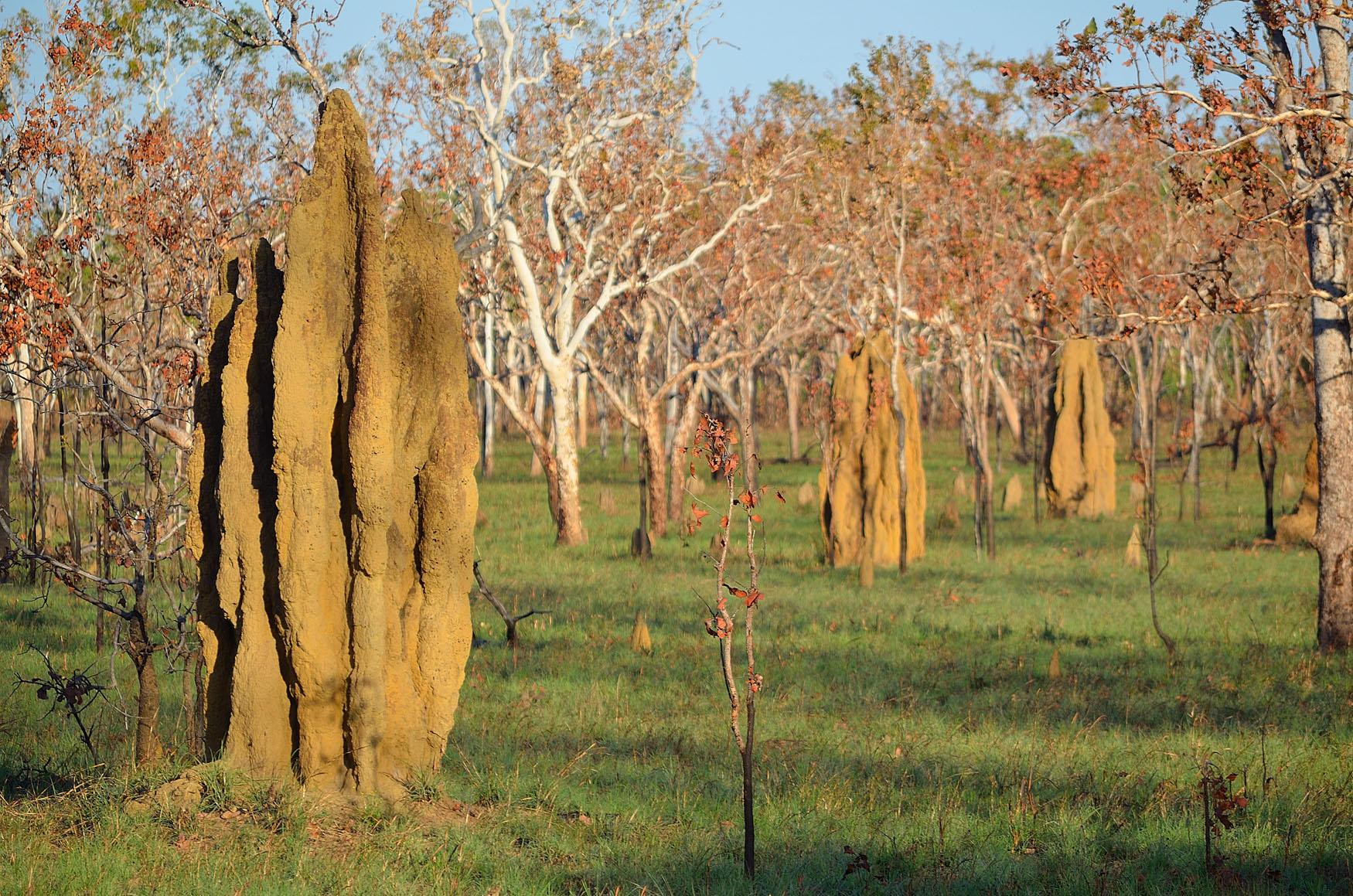 Termitenhügel Northern Territory NT Australien