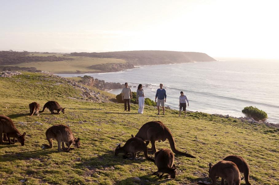Kängurus auf Kangaroo Island Südaustralien