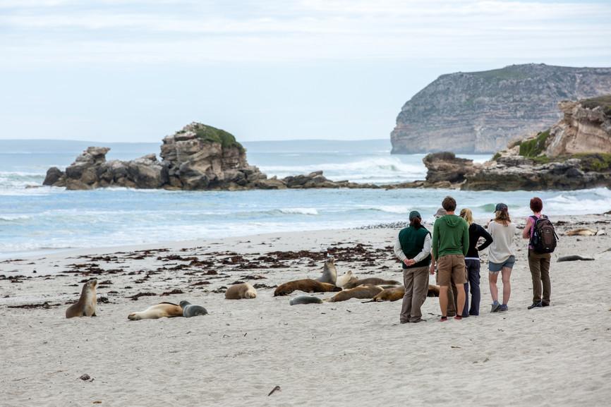 Gruppe am Strand der Seal Bay Kangaroo Island Südaustralien