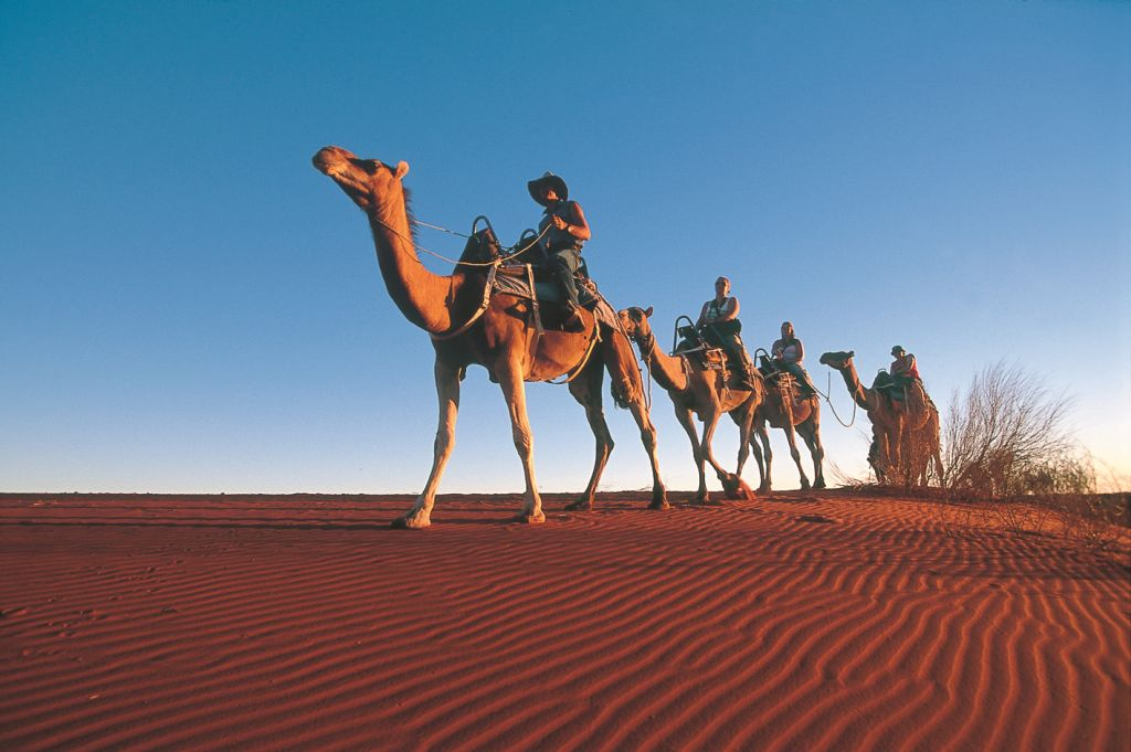 Camel Track Kings Canyon Northern Territorry Rotes Zentrum Australien