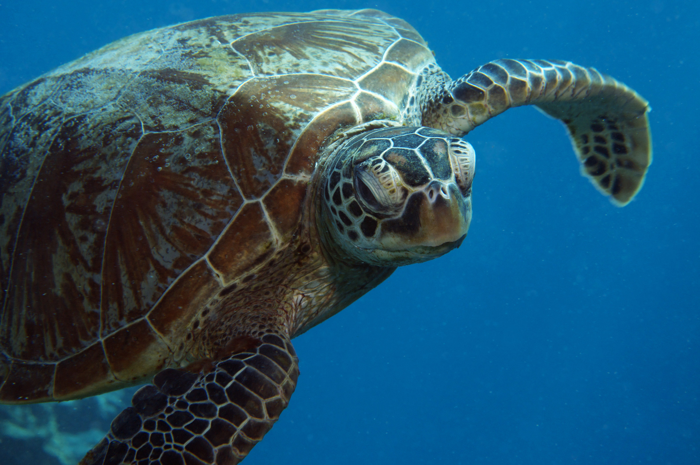Turtle Wasserschildkröte Great Barrier Reef Queensland Australien