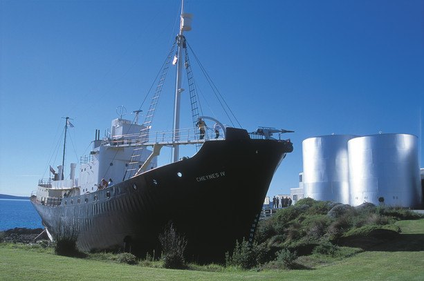 Walfangmuseum Albany Westaustralien WA