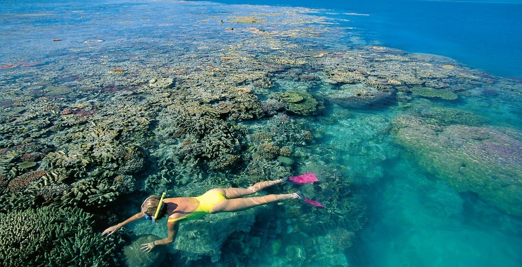 Schnocheln am Hardy Reef Great Barrier Reef Whitsunday Islands Queensland
