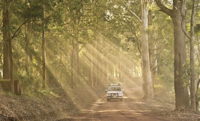 Karri Tree Wälder Südwesten Westaustralien WA