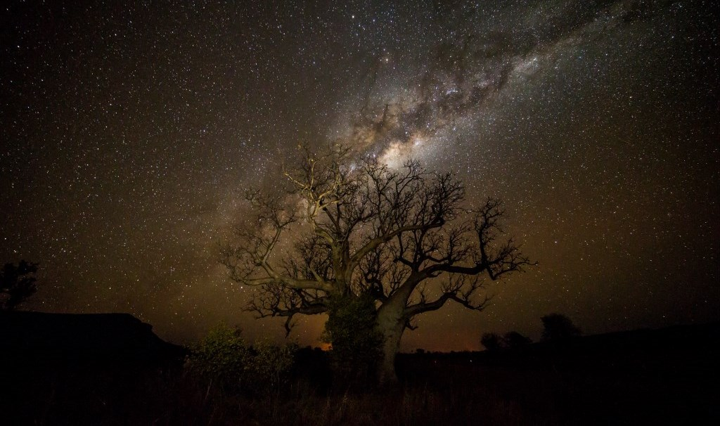 Boab Tree at night Kimberleys Westaustralien