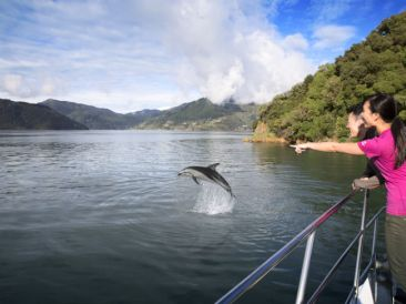 Marlborough Sound Delfin Neuseeland