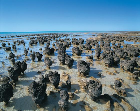 Hamelin Pool Stromatolithen Monkey Mia Westaustralien WA Australien AU