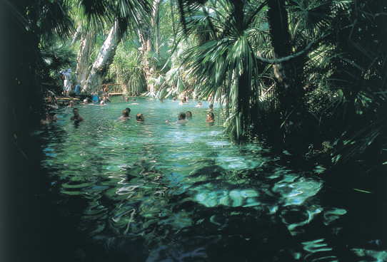 Mataranka Hot Springs Northern Territory NT Australien