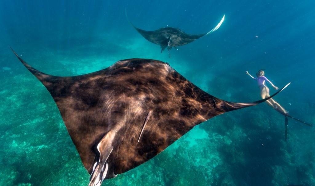 Schwimmen mit Mantas Coral Bay Ningaloo Reef Westaustralien