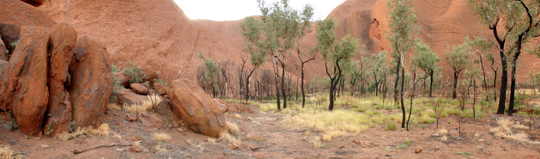 Bäume am Uluru Ayers Rock Northern Territory Australien Header