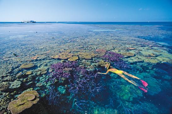 Schnorcheln am Great Barrier Reef Queensland Australien AU QLD
