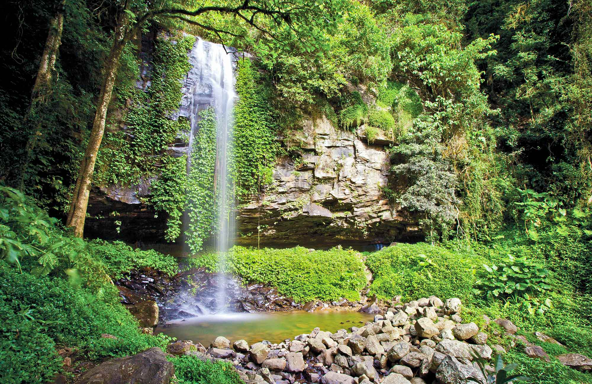Chrystal Shower Fall im Dorrigo Nationalpark New South Wales Australien