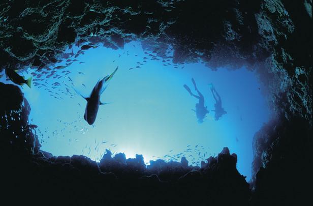Tauchen am Great Barrier Reef Queensland Australien