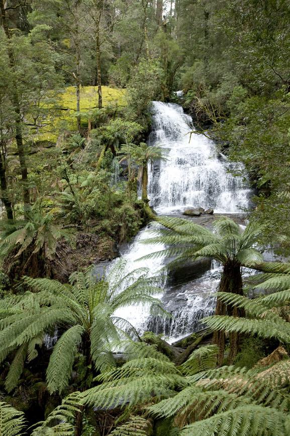 Wasserfall im Otway Nationalpark Great Ocean Road Victoria Australien VIC